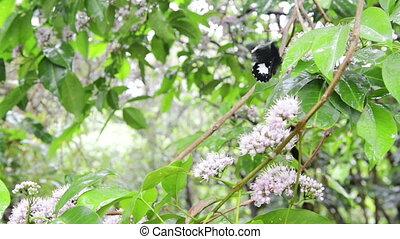 Butterfly on Butterfly Tree
