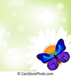 Butterfly On Camomile, Isolated On White Background, Vector Illustration
