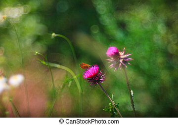 Butterfly on Carduus flower - View of butterfly on Carduus...