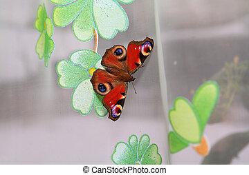 butterfly on curtain on window