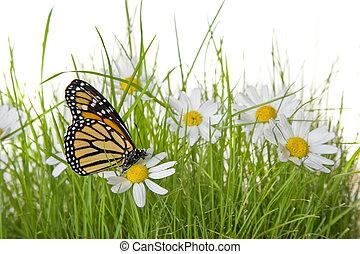 Butterfly on Daisy flower