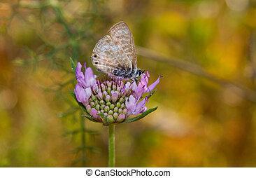 Butterfly on daisy flower - Side macro of butterfly on...