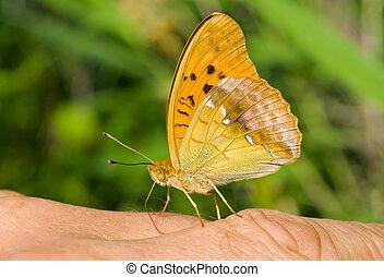 Butterfly on Finger 3