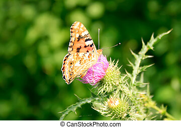 Butterfly on flower close up.