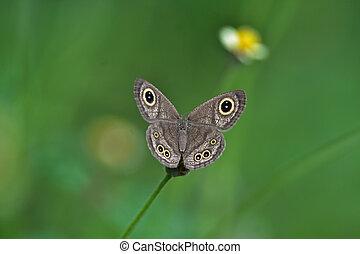 Butterfly on flower in a meadow
