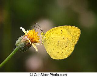 Butterfly on flower in the garden