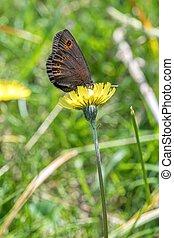 butterfly on flower in the meadow