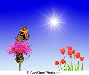 butterfly on flower under bright sun