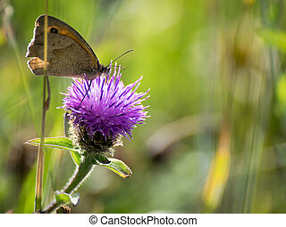 Butterfly on flower with space for text