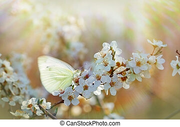 Butterfly on flowering - blooming branch