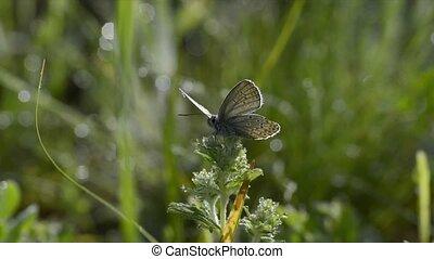 Butterfly on flowers in meadow