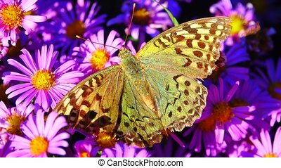 butterfly on flowers in the autumn