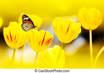 butterfly on flowers (Tulip)
