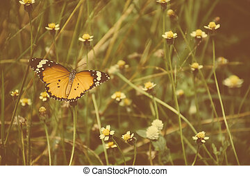 butterfly on grass flower, vintage style.