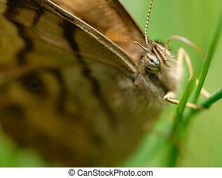 Butterfly on Grass Macro 2