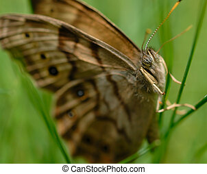 Butterfly on Grass Macro 3