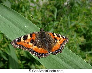 Butterfly on grass sheet