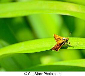 Butterfly on green leaf macro shot