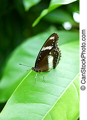 Butterfly on green leaf.
