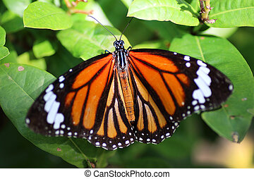 butterfly on green leaves background