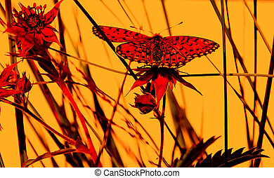 butterfly on herb under red illumination