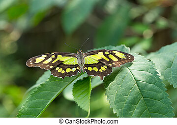 Butterfly on leaf, nature background