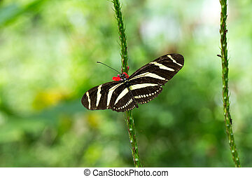 Butterfly on leave, nature background