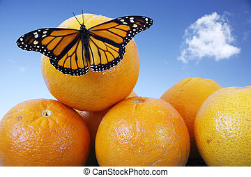 Butterfly on Oranges - Monarch butterfly on juicy oranges ...