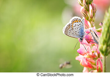butterfly on pink flower close