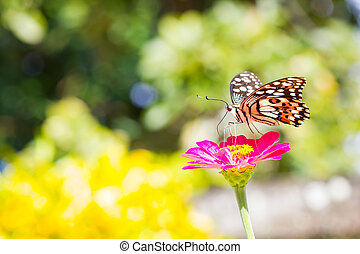 Butterfly on pink flower in tropical garden. Thailand