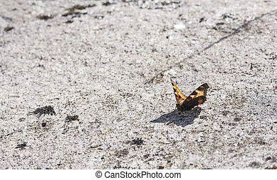 Butterfly on rock surface