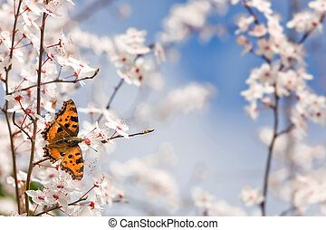 butterfly on spring flowers - Nymphalis polychloros...