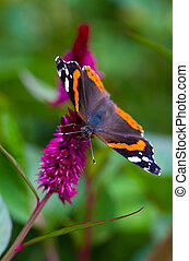Butterfly on the flower