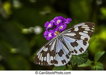 Butterfly on the purple flowers