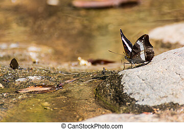 Butterfly on The Rock