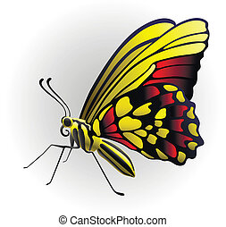butterfly on the with background