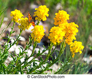 Butterfly on the yellow flowers in spring