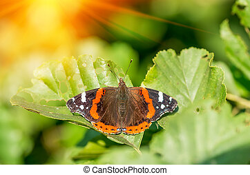 butterfly on tree leaf