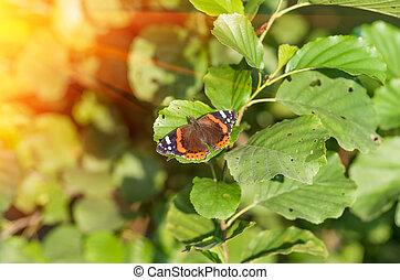 butterfly on tree leaf