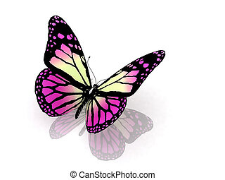Butterfly on white background