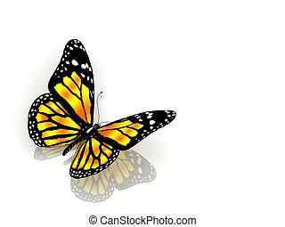 Butterfly on wight backgraund