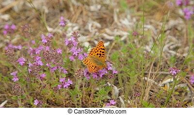 Butterfly on wildflowers in the field