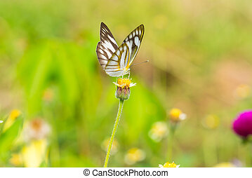 Butterfly on yellow flower with grass.