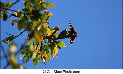 Butterfly - Orange butterfly