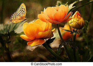 Orange Butterfly Flying over Orange Flowers