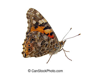 butterfly (Painted Lady) isolated on white
