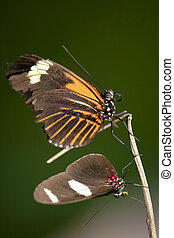 Butterfly Pair Resting