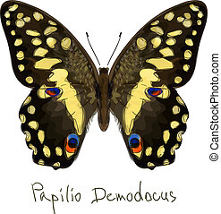 Butterfly Papilio Demodocus. Watercolor imitation. Vector...