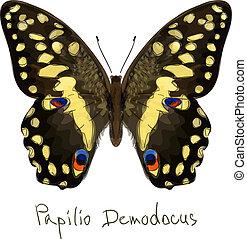 Butterfly Papilio Demodocus. Watercolor imitation.