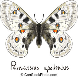 Butterfly Parnassius Apollonius. Watercolor imitation....